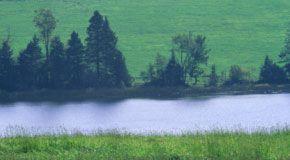 Uso di prodotti fitosanitari e misure di mitigazione del rischio per la riduzione della contaminazione dei corpi idrici