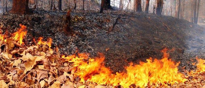 wpid-18178_incendi.jpg