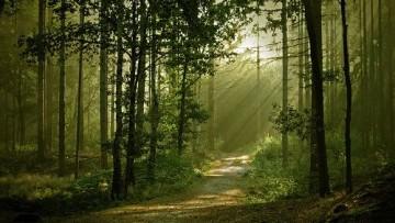 I boschi italiani crescono e assorbono 1,24 miliardi di tonnellate di carbonio
